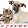 Собаки, кошки и др. животные даром. Новосибирск