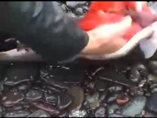 Рыбалка в Магадане