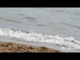 Озерные волны Алтайского края! Автор Евгения Волущукова 2016г