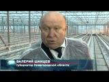 4 гектара новых теплиц для выращивания овощей заложат в Нижегородской области.