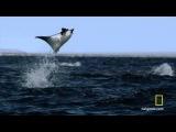 Невероятное событие в океане засняли на камеру