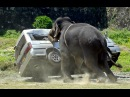 В объективе: Необычное поведение животных: Звериные причуды \ Nat Geo WILD HD