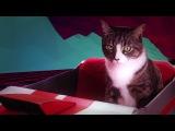 Drive Nightcall - Kavinsky