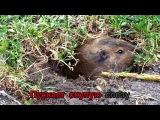 TSYGUN - Рожденный во Тьме (OFFICIAL LYRIC VIDEO) - GRINDCORE KARAOKE