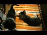 Отдам котят даром в хорошие руки. Два игривых мальчугана ждут Вас!!!