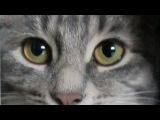 Кошка Матрёшка приносит.