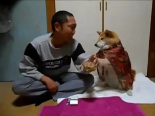 Very DisAppointed Chinese Man Trying To Drink Whiskey And His Pet Dog Stops Him