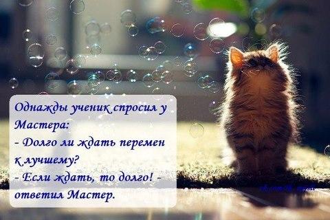 http://cs631522.vk.me/v631522448/6d92/D-vofNFIIw8.jpg