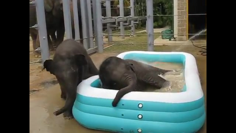 Baylor and Tupelo in the Pool (1)