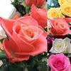 💐 flowers 💐