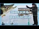 ЗИМНЯЯ РЫБАЛКА на жерлицы 🦈 ловля щуки на живца зимой Харьковская область