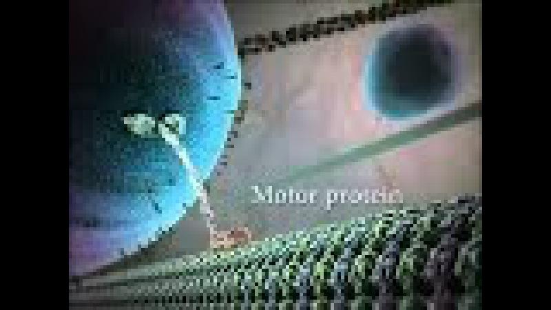 Внутренняя жизнь клетки экстравазация или миграция лейкоцита к области воспаления 3D анимация