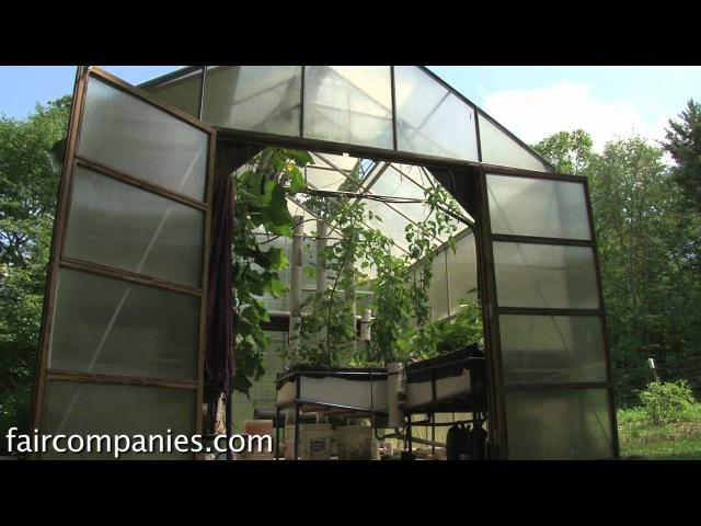 Backyard aquaponics DIY system to farm fish with vegetables