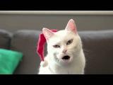 кошка поет песню))