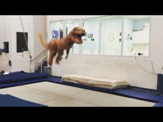 "Inside Gymnastics on Instagram: ""#ICan't 😂😂😂😂😂😂😂 #Repost @samanthasendel Now presenting Tramposaurus-Rex #rawr Best idea ever @rosiemaclennan @smithski123 #thegymnastzone…"""