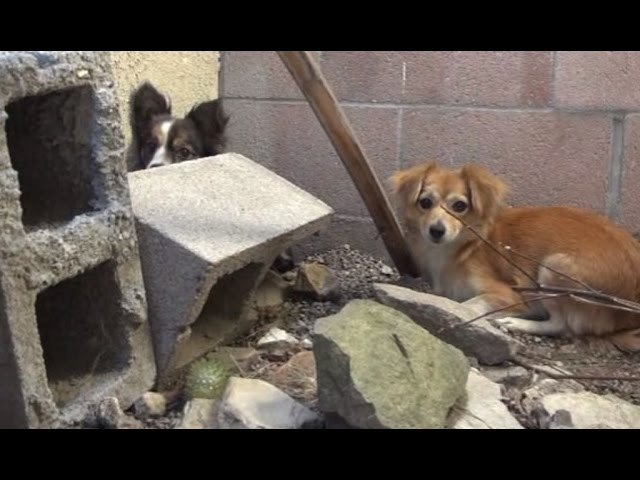 Three dogs were dumped on the street by their owner. OMG, watch until the end