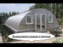 Выращивание огурцов в теплице. Теплица из поликарбоната. Бизнес идея.