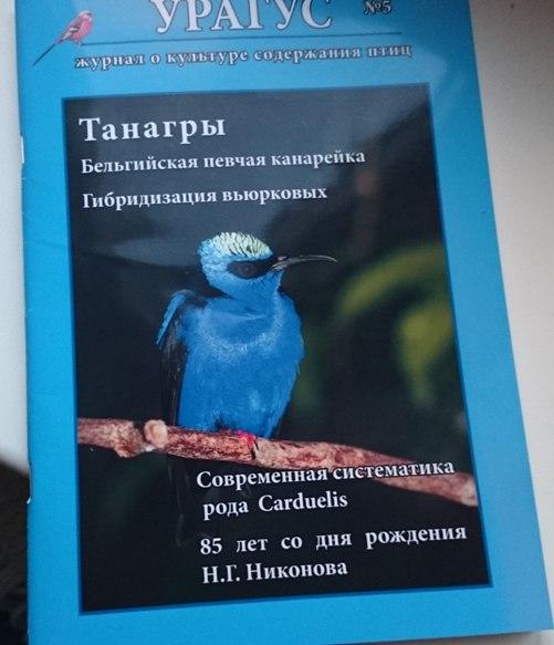 СМИ о моих птицах Rg6UoNY00S0