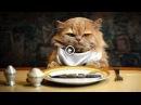 Ты мой миленький хорошенький мой котик/ Самое прикольное видео