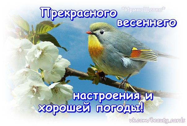 https://pp.vk.me/c631524/v631524245/1bfae/fIlk_MxWiEk.jpg