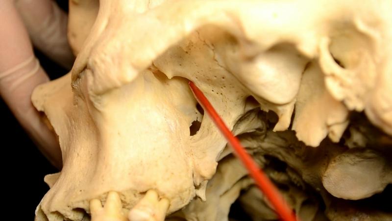 крыловидно-нёбная ямка