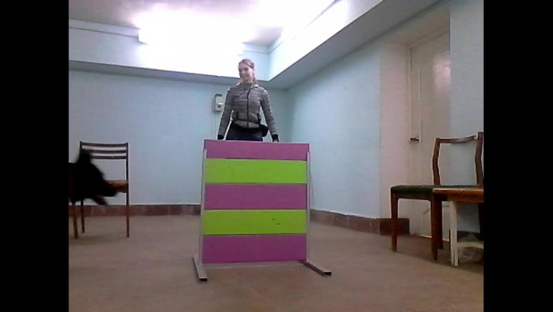 Немецкая овчарка Шонди Команды на немецком и русском языках
