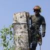Спил и обслуживание деревьев в Нижнем Новгороде