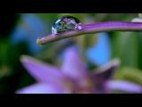 Как распускаются цветы таймлепс. Шикарно! Flowers in growth time lapse