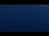 Мегалодон-самая  большая  акула, в  мире.