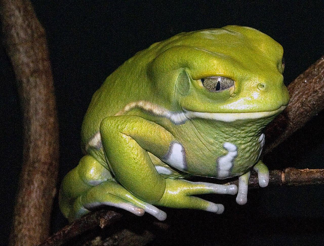 Фото лягушки на аву в