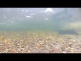 Подводная охота на Енисее