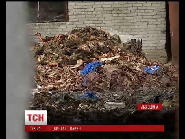 На Львівщині поліція розшукує зловмисників, які облаштували під Жовквою цвинтар тварин