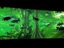 Большой амазонский биотоп в океанариуме Барселоны
