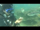 Подводный мир!!!Кормлю рыбок мидиями!!!Как же там здорово...тишина...красота...