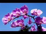 Вальс цветов. Из кф