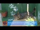 Притулок для тварин безхатьок в Ужгороді вдруге розчинив двері перед відвідувачами