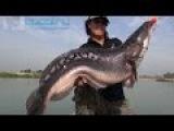 Трофейная рыбалка   Гигантский змееголов   Таиланд   ePool.ru   eGazon.ru