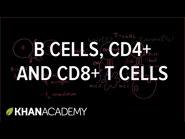 Review of B cells, CD4 T cells and CD8 T cells | NCLEX-RN | Khan Academy