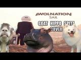 Awolnation - Sail (animal cover)