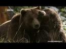 Долина Гризли - Йеллоустон Поле битвы . Документальный фильм National Geographic