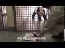 Anne Pandanın Yavrusuna Kavuştuğu An - An accentuated the mother panda cub