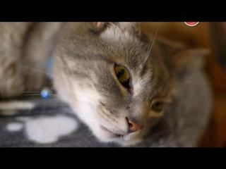 BBC. Кошачьи тайны / Cat Watch 2014: The New Horizon Experiment, 1 серия из 3