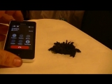 VS. Мобильный телефон vs магнитной руды