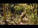 Остров лемуров Мадагаскар  Island of Lemurs Madagascar (2014) BDRip 720p [vk.comFeokino]