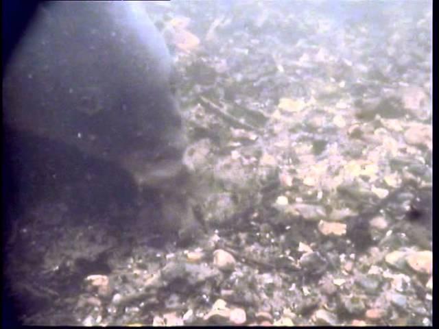Подводная ловля карпа фильм 6 часть 1 от KORDA