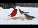 птицы во дворе дома Огайо Backyard Bird Watching Northeast Ohio High Definition HD