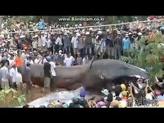 Biggest Python Snake - Giant Anaconda | Most Amazing Wild Animal Attacks - Anaconda Snake VS Dog