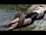 World's biggest python snake found in Amazon river | Giant Anaconda Most amazing wild animal attacks