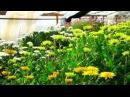 Цветы Применяем Байкал ЭМ
