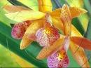 Радужная релаксация. Цветы